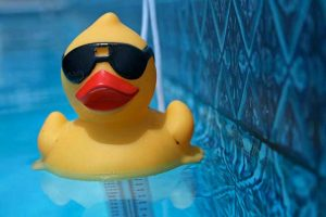 Photo of Duck in Pool for Summer in Recovcery Page