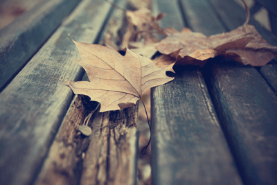 Recovery and Mental Health During Seasonal Changes