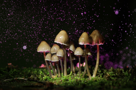 Mushroom Therapy for Addiction Treatment - Non 12 Step Drug