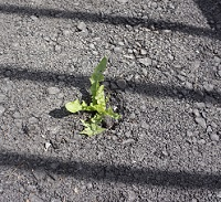 image of a green plant pushing through the road to symbolize persistence in life and recovery