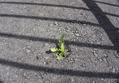 image of a seedling pushing through asphalt to symbolize persistence in recovery