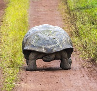 tortoise walking slowly to symbolize the idea of gradualism instead of harm reduction