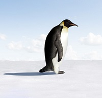 image of ostracized pengui signifying what it is like to be ostracized as an addiction treatment provider