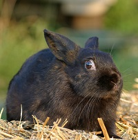 image of a stunned rabbit to symbolize someone hearing poor advice about quitting drinking