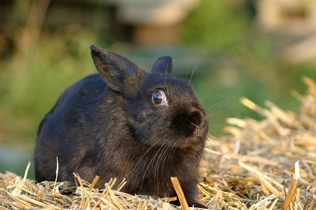 image of shocked rabbit to depict someone who has heard some terrible advice about quitting drinking
