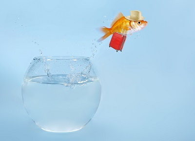 image of goldfish jumping out of bowl to illustrate leaving difficult holiday events