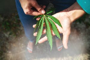 the link between cannabis curing cancer